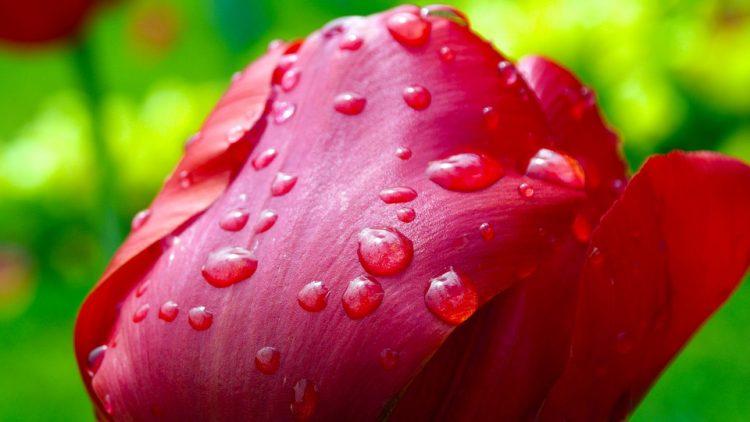 Flor con gotas