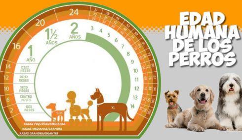 Calculadora de la edad humana de los perros