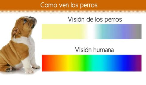 Visión de los perros