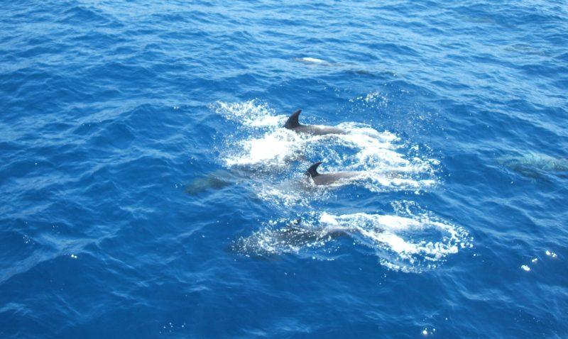 ¿Cuantos años viven los delfines?