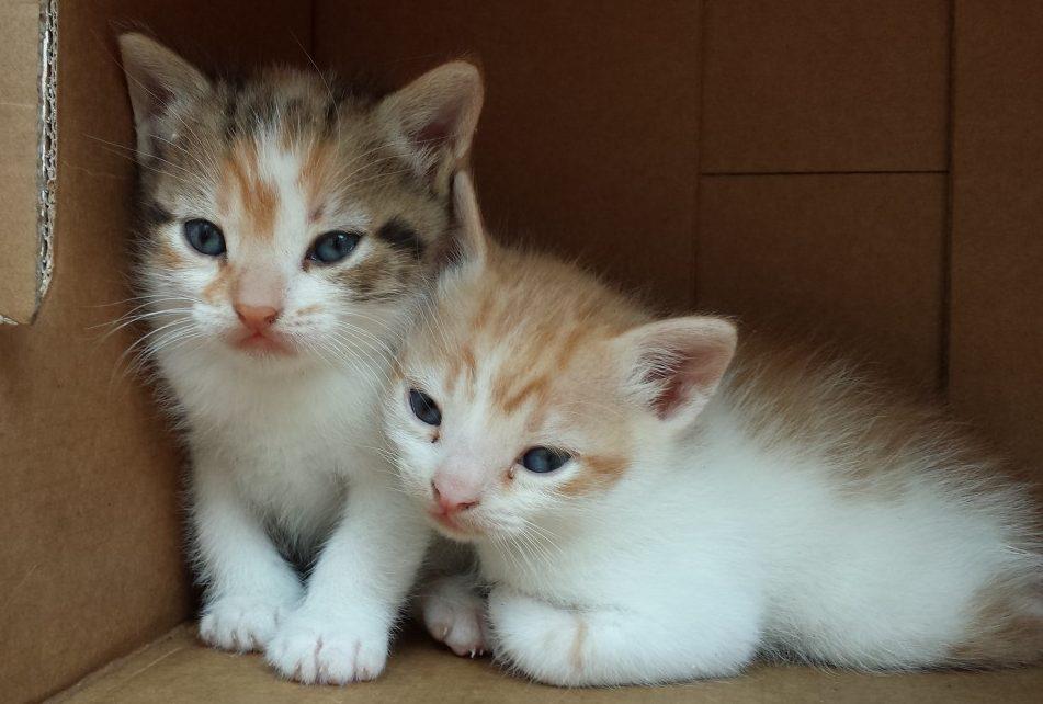 ¿Cuanto dura el embarazo de las gatas? y cuidados que necesita