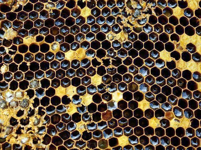 Los panales de abejas pueden generar tripofobia