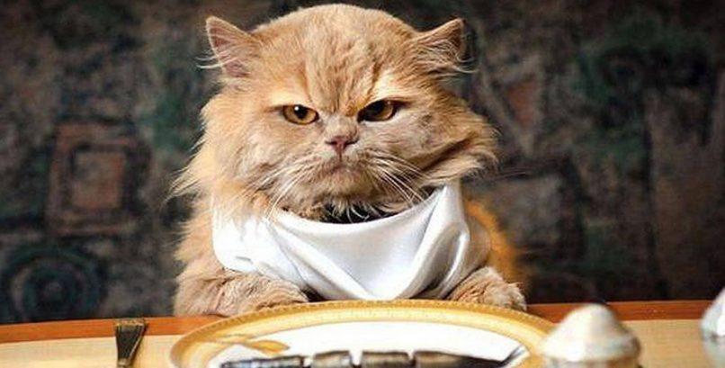 Gato enfadado comiendo