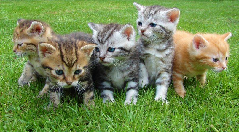 Lindos gatitos