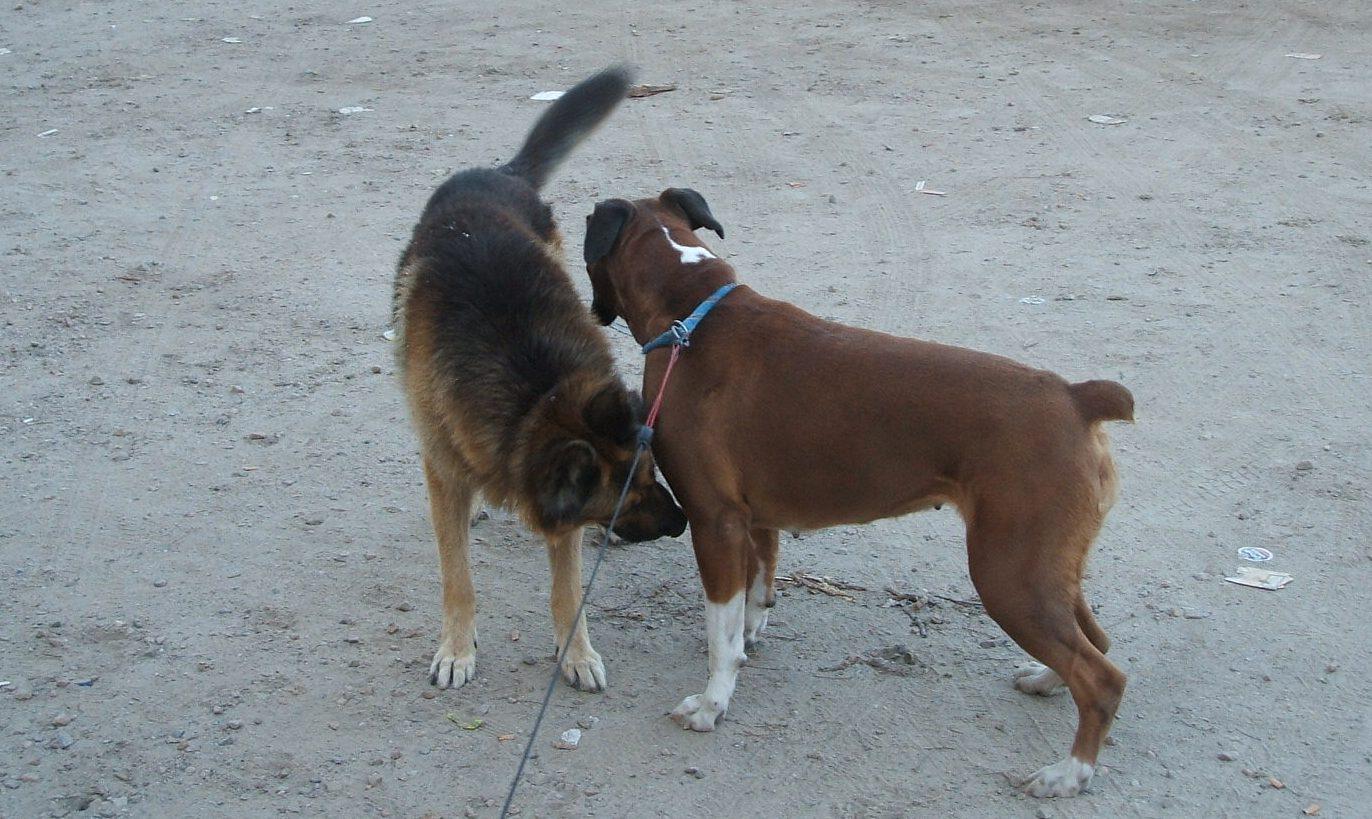 Como evitar las mordeduras de los perros
