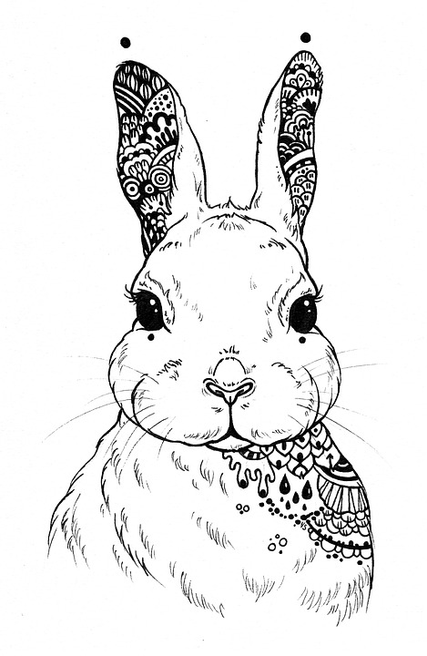 Cabeza de un conejo para pintar