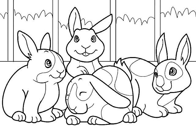 Dibujos conejos para colorear
