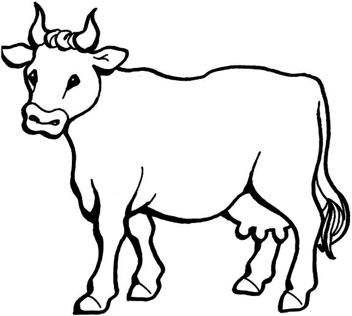 Vaca para pintar