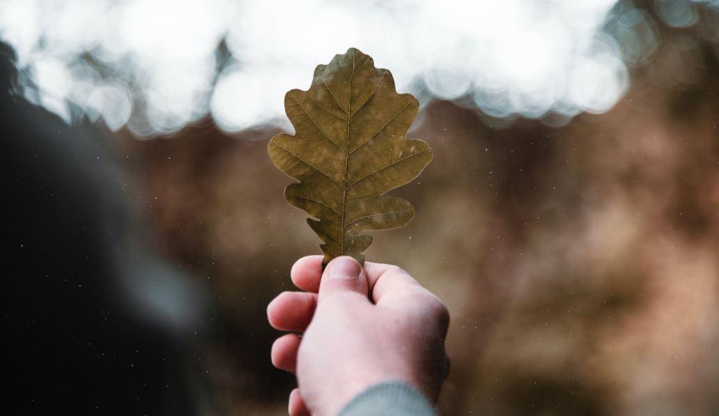 Empresas familiares: el secreto para que triunfen